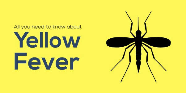 Yellow Fever cause of alleged unusual deaths in  Enugu Ezike - Enugu govt