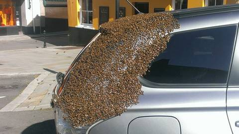 Swarm of bees follows car for 2 days to rescue queen trapped in back