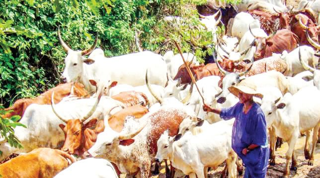 Benue killings: ACF sets up committee on anti-grazing law
