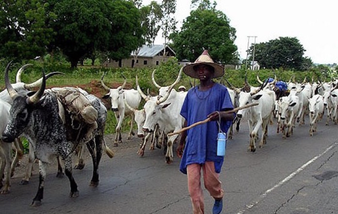 Cows are more important than human beings in Nigeria – Femi Aribisala