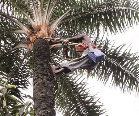 Image result for Police arrest palm wine tapper over son's death after drinking wine